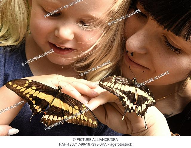 13 July 2018, Germany, Wittenberg Lutherstadt:The three-and-a-half-year-old Lilly Celine and her mother observe a-few-minutes-old king swallowtails on their...