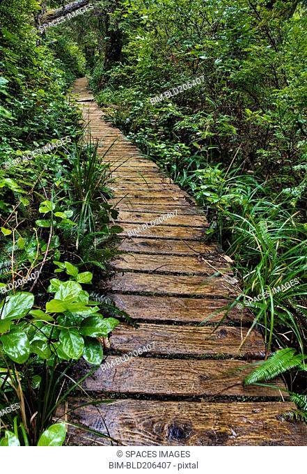 Walkway Through Forest