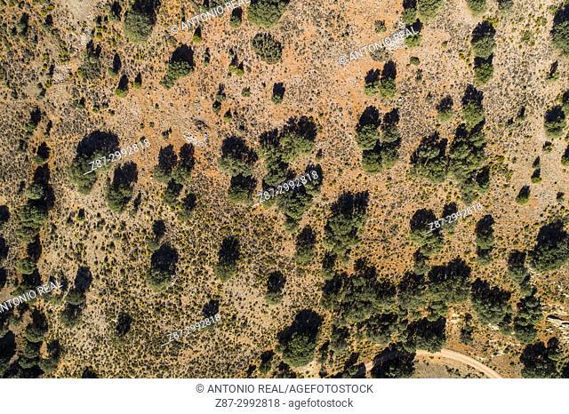 Oak grove, aerial view, Monumento Natural Laguna del arquillo. Sierra de Alcaraz. Masegoso. Albacete Province. Spain