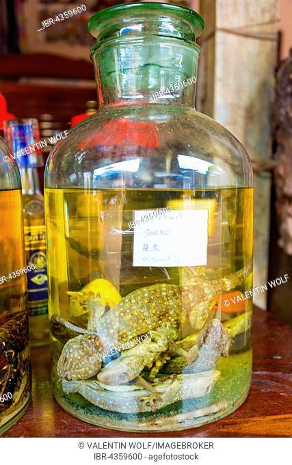 Rice wine with Tokay geckos (Gekko gecko), Sang Ha, Louangphabang, Laos