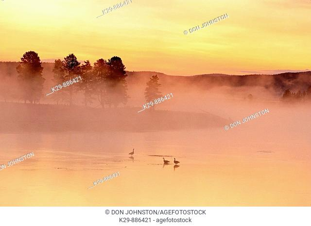 Pre-dawn skies reflected in the Yellowstone River with morning fog and loafing Canada geese. Hayden Valley. Yellowstone National Park, Wyoming, USA