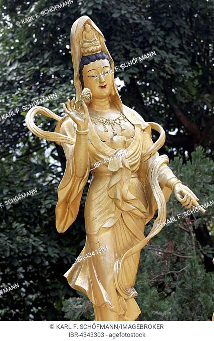 Statue of the Buddhist goddess Gunayin or Kwan Giu or Kwun Yam, female Bodhisattva, Ten Thousand Buddhas Monastery, Sha Tin, New Territories, Hong Kong, China