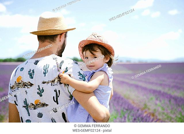 France, Provence, Valensole plateau, father and daughter in lavender fields in the summer