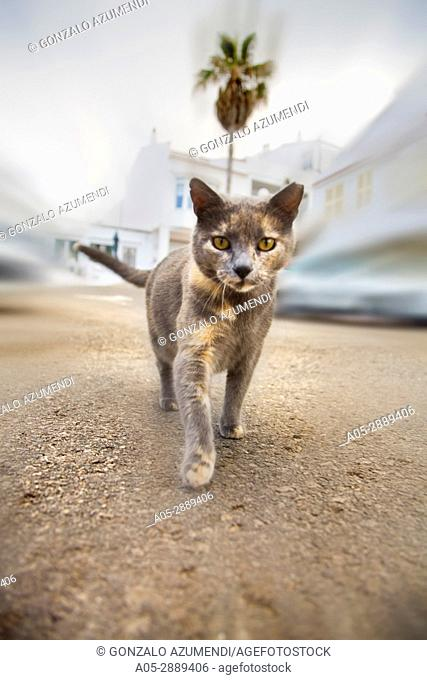 Cat in the street. Es Grau.Minorca. Balearic Islands. Spain