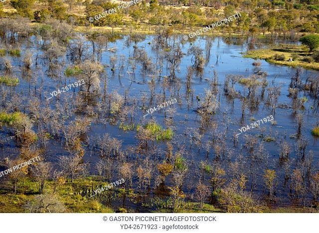 Okavango Delta aerial view, Botswana. The Okavango Delta is home to a rich array of wildlife. Elephants, Cape buffalo, hippopotamus, impala, zebras