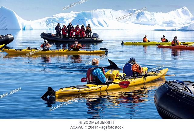 Kayakers and Zodiak passengers encounter close up, a Minke Whale while paddling in Curtis Bay, Antarctic Peninsula