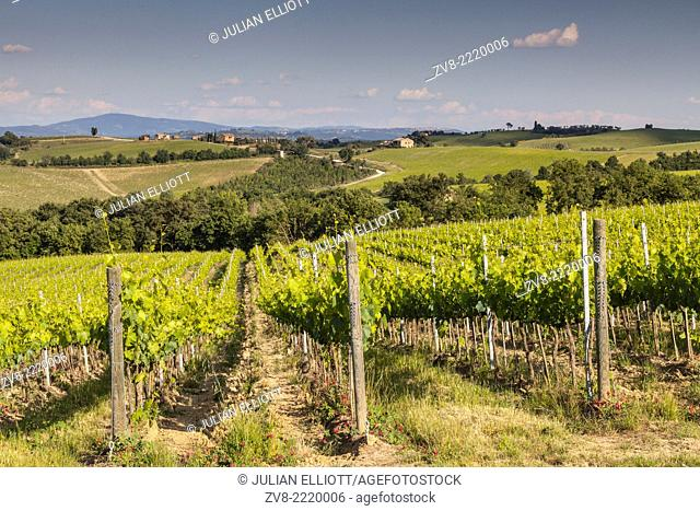 Vineyards near to Montepulciano, Tuscany. The area is a major producer of food and drink. It is known world-wide for its wine