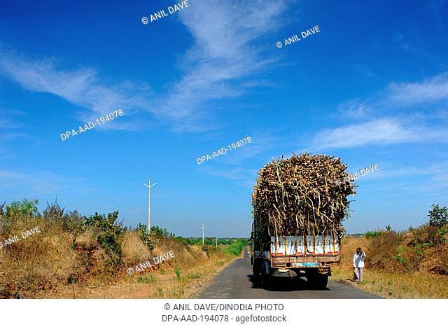Sugar cane transportation, bidar, karnataka, india, Asia