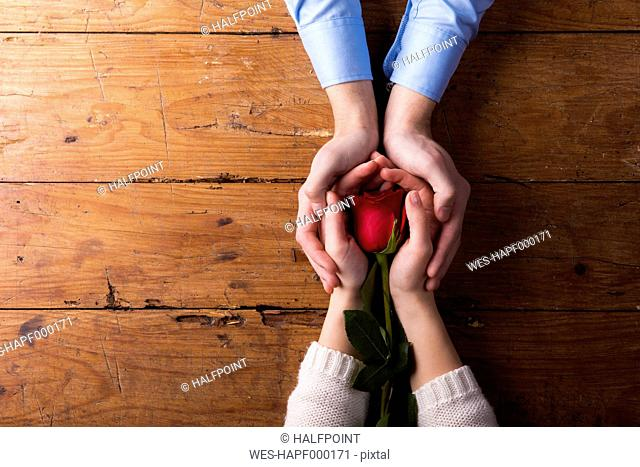 Hands of a young couple holding red rose