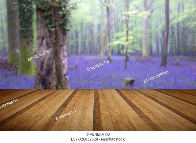 Beautiful carpet of bluebell flowers in misty Spring forest landscape with wooden planks floor