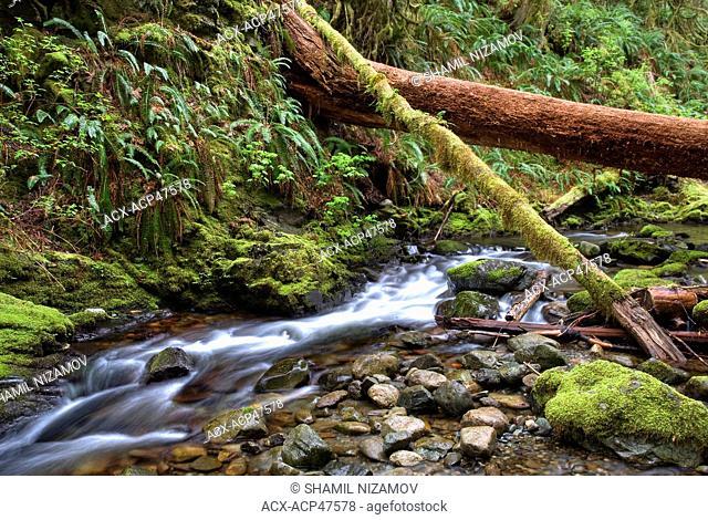 Goldstream River, Goldstream Provincial Park, Vancouver Island, British Columbia, Canada