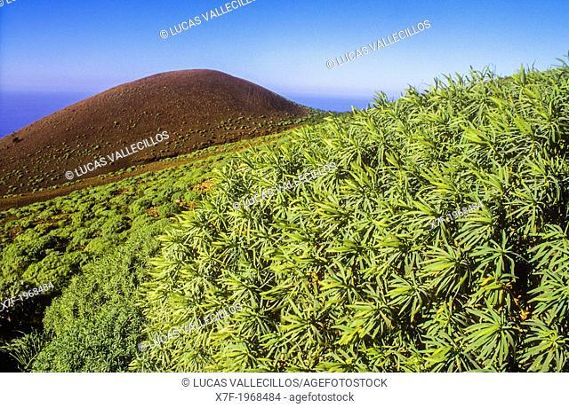View of La Dehesa, El Hierro, Canary Island, Spain, Europe
