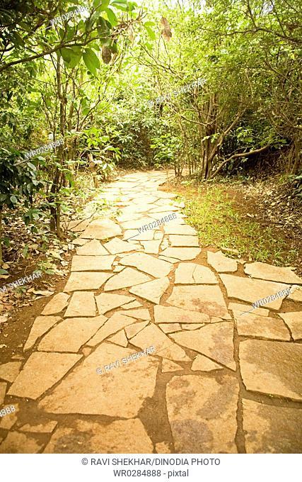 Stone path in green trees , Palolem beach , Goa , India