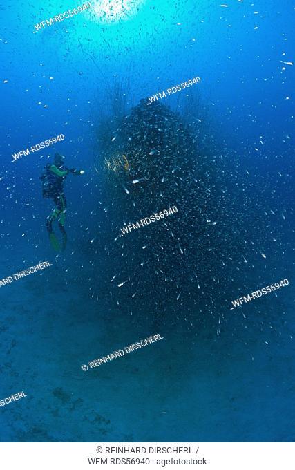 Diver at Stern of USS Apogon Submarine, Bikini Atoll, Micronesia, Pacific Ocean, Marshall Islands