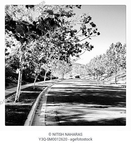 A curbside afternoon in San Ramon, California, USA