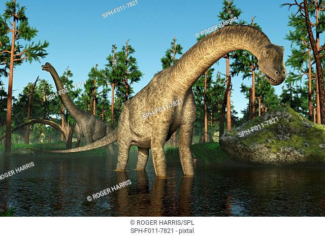 Brachiosaurus, computer illustration