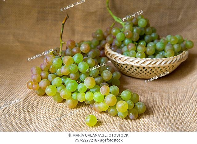 Bunches of grapes from Vinalopo. Alicante, Spain