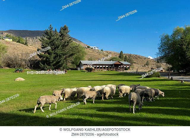 Sheep at the Estancia Hotel Kau Yatun in El Calafate, Argentina
