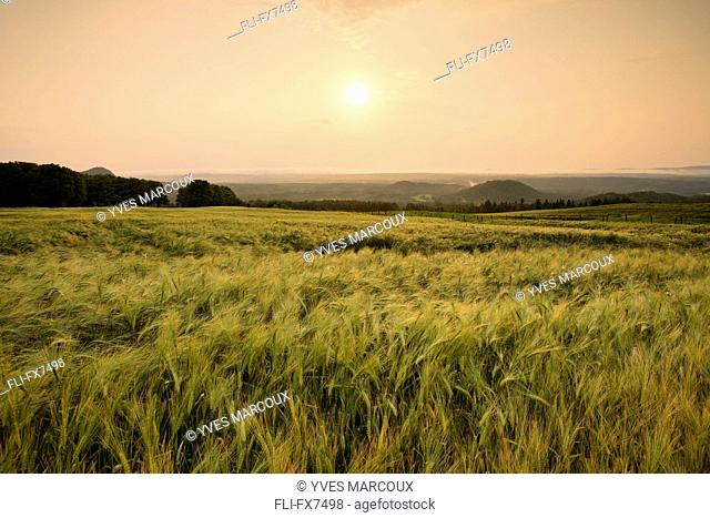 Sunrise over Barley Field, Pohenegamook Sully,Bas-Saint-Laurent Region, Quebec