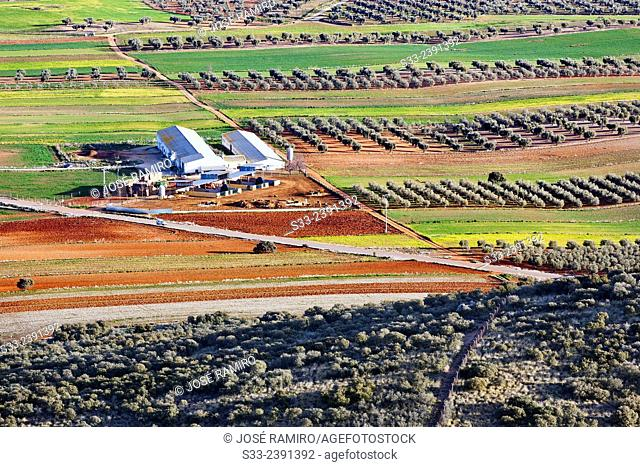 Farm in Noez. Toledo. Castilla la Mancha. Spain. Europe