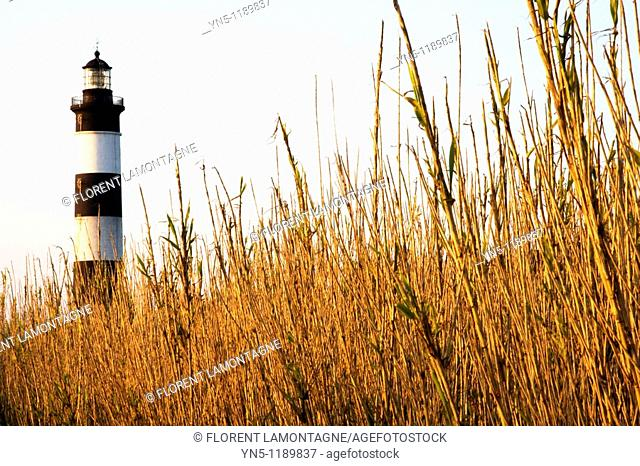 France, Poitou Charentes province, Departement of Charente Maritime 17, Ile d'Oléron   The lighthouse of Chassiron, the most famous one on the island where the...