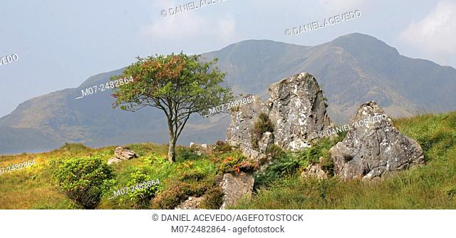 Delphi valley, county Mayo, Ireland, Europe