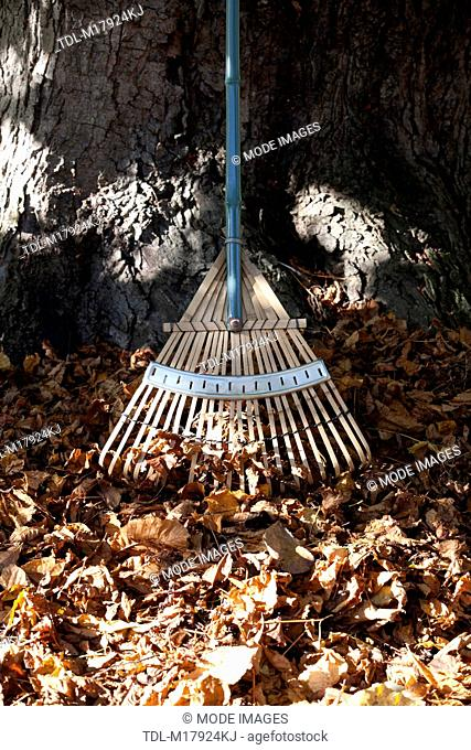 A rake leaning against a tree trunk, close up
