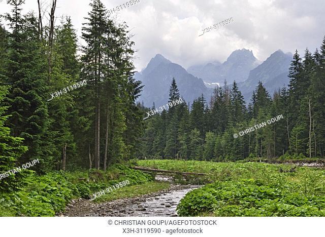 riviere Bialka, pres de Lysa Polona, Parc National des Tatras, region Podhale, Massif des Tatras, Province Malopolska (Petite Pologne), Pologne