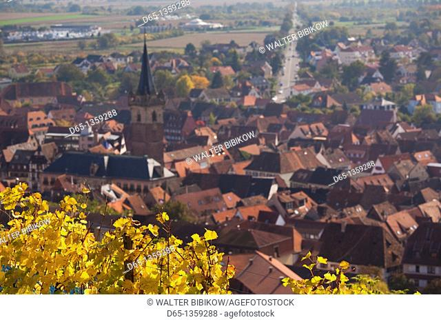 France, Bas-Rhin, Alsace Region, Alasatian Wine Route, Obernai, town overview from vineyards, autumn