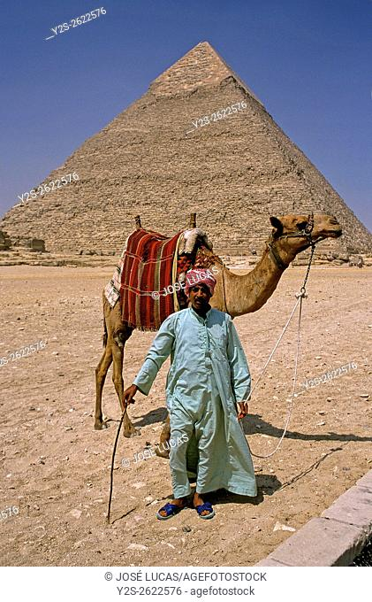 Camel driver and pyramid of Khafra, Giza, Cairo, Egypt, Africa