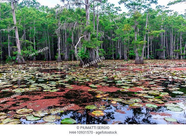 Caddo lake, Texas, USA