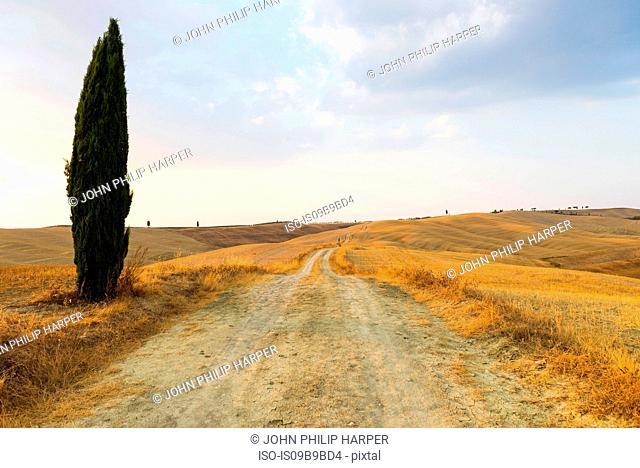 Scenic view, Siena, Tuscany, Italy, Europe