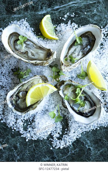 Fresh oysters with lemon on salt