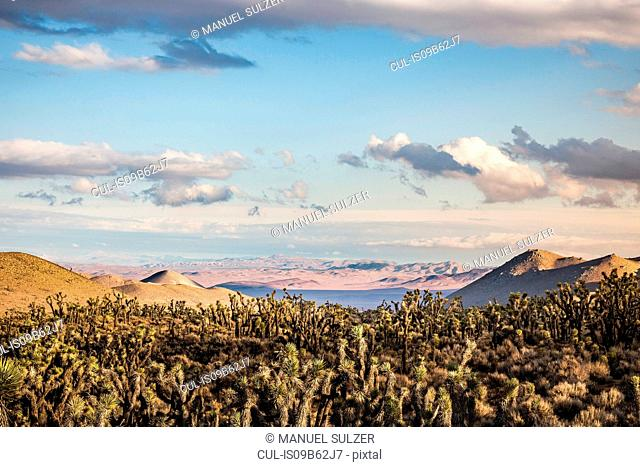 Landscape with cacti in Death Valley National Park, California, USA