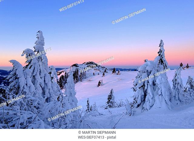 Germany, Bavaria, Bavarian Forest in winter, Bodenmaiser Riegel, snow-capped spruces in the morning