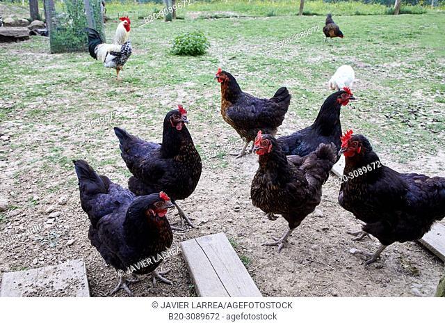 chicken farm, Rural apartment, Deba, Gipuzkoa, Basque Country, Spain, Europe