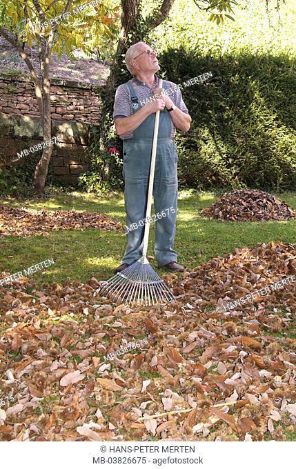 Senior, gardening, rakes, fall foliage