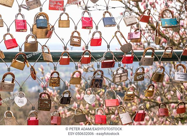 Many locks of love with a pink Liriodendron (Tulip tree) in the background in Linz, Austria