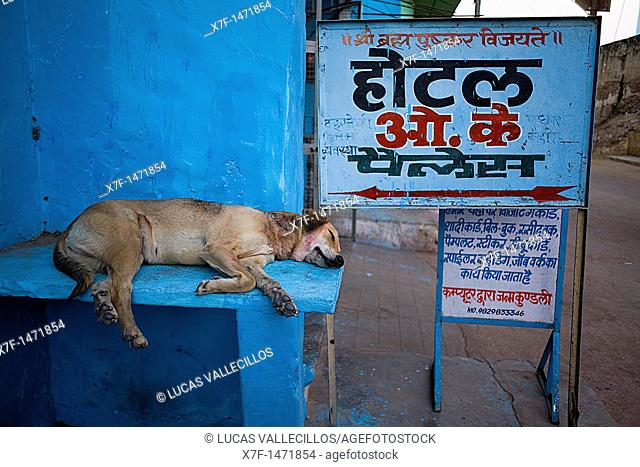 Dog sleeping,pushkar, Rajasthan, india