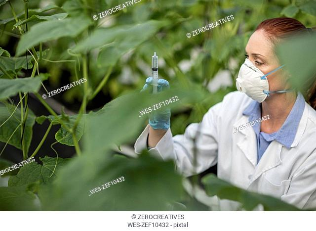 Female scientist in greenhouse with syringe