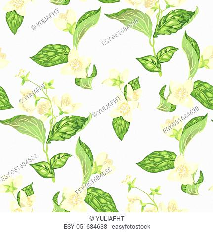 Seamless pattern with jasmine branches with flowers in realistic graphic vector illustration