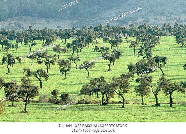 Alcudia valley. Ciudad Real province, Castilla-La Mancha. Spain