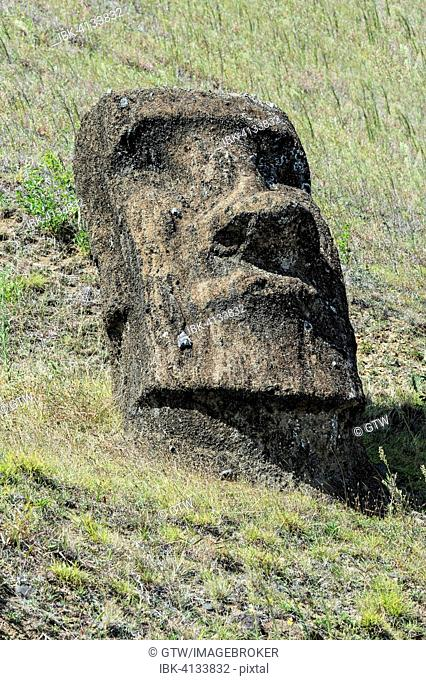 Moai in Rano Raraku, Rapa Nui National Park, Unesco World Heritage Site, Easter Island, Chile