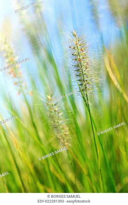 Natural green background with grass and bokeh lights
