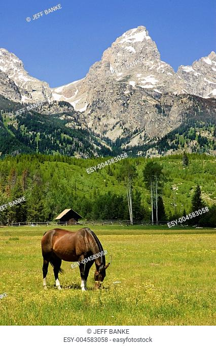horse in a paddock at the base of the Tetons