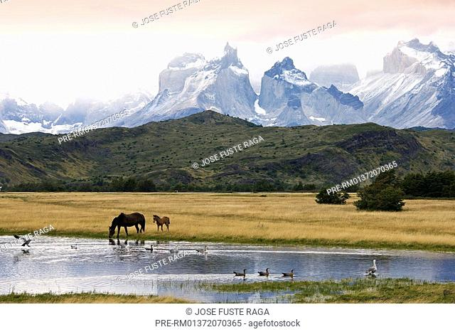 The Cuernos del Paine in the Torres del Paine National Park, Chilean Patagonia, Torres del Paine National, Chile, South America