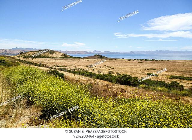 Landscape by the ocean, San Luis Obispo County, California, United States, North America