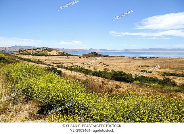Landscape by the ocean, San Luis Obispo County, California, United States, North America
