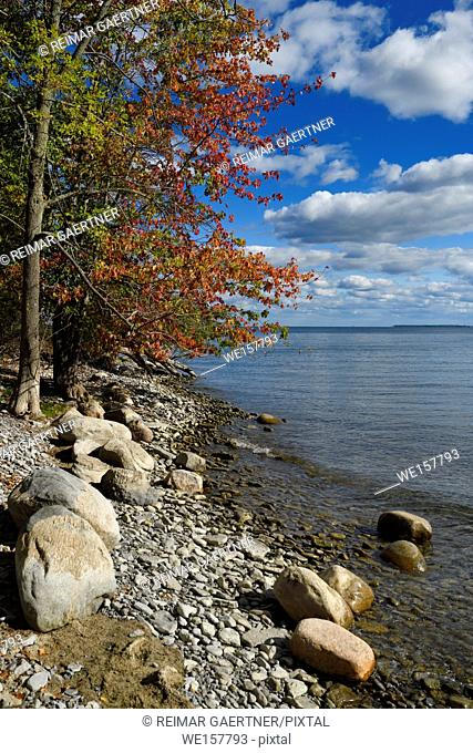 Red Maple tree leaves on shore with rocks and boulders at Prince Edward Bay of Lake Ontario at Waupoos Prince Edward County Canada