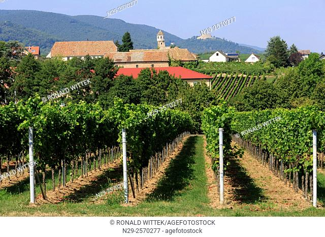Edenkoben, vines, Hambach Castle, Vineyard, Winery, Southern Wine Route, Rhineland-Palatinate, Germany
